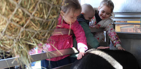 Fishers Mobile Farm school visits