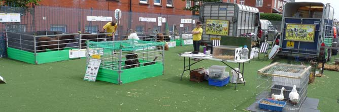 Fishers Mobile Farm visit to Revoe Primary in Blackpool
